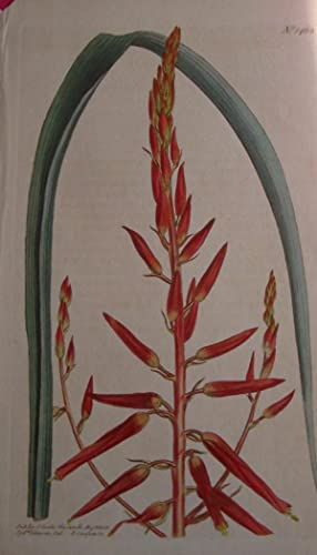 ORIGINAL HAND-COLOURED COPPER ENGRAVING - Pitcairnia integrifolia FROM CURTIS'S BOTANICAL MAGAZIN...
