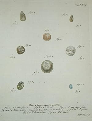 ORIGINAL HAND-COLOURED COPPER ENGRAVING - OVULA PAPILIONUM EUROP (Eggs of European Butterflies) ...