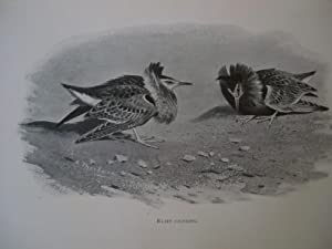 LORD LILFORD ON BIRDS Being a Collection: Lilford, Lord; Aubyn