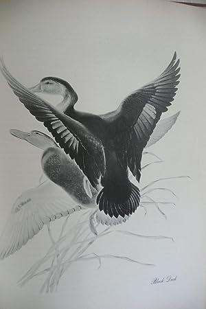 Menaboni's Birds: Menaboni, Athos