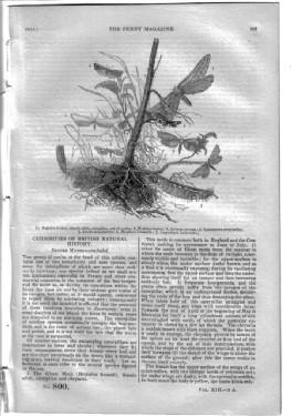 PM 800. The PENNY MAGAZINE 1844 (CHESTER CATHEDRAL (with engraving), + BRITISH MOTHS (final part),+...