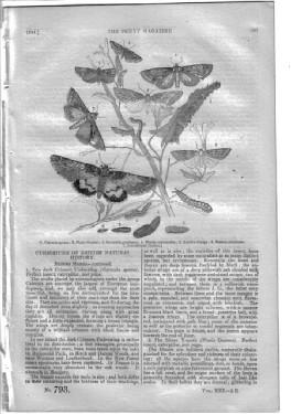 PM 793. The PENNY MAGAZINE 1844 (TOPIARY WORK. George Psalmanazar (Formosa imposter pt 1-concluded ...