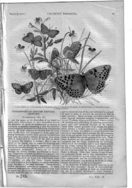PM 765. The PENNY MAGAZINE 1844 (BUTTERFLIES pt 3, + BARBERS & SURGEONS (pt 1 concluded in 766)...