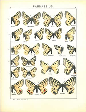 Les macrolépidoptères du globe, vol. 1 à: SEITZ Adalbert