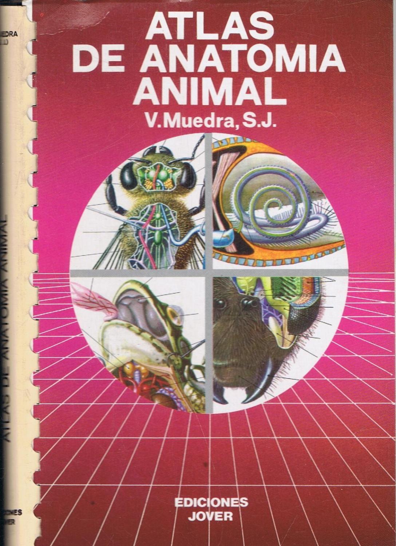 ATLAS DE ANATOMÍA ANIMAL de Muedra. V: - Librería Torreón de Rueda