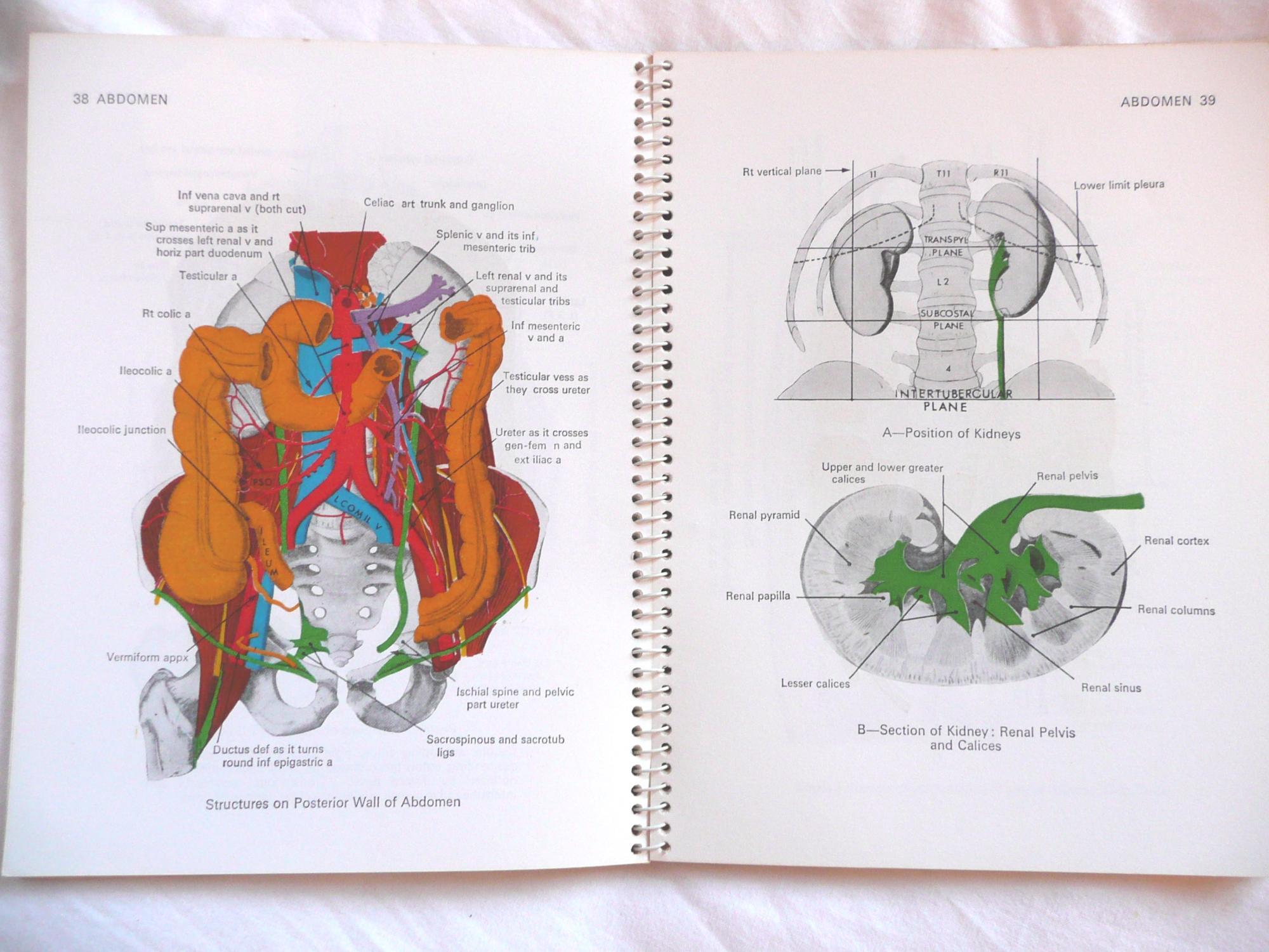 Jamieson\'s Illustrations of Regional Anatomy Section III Abdomen by ...