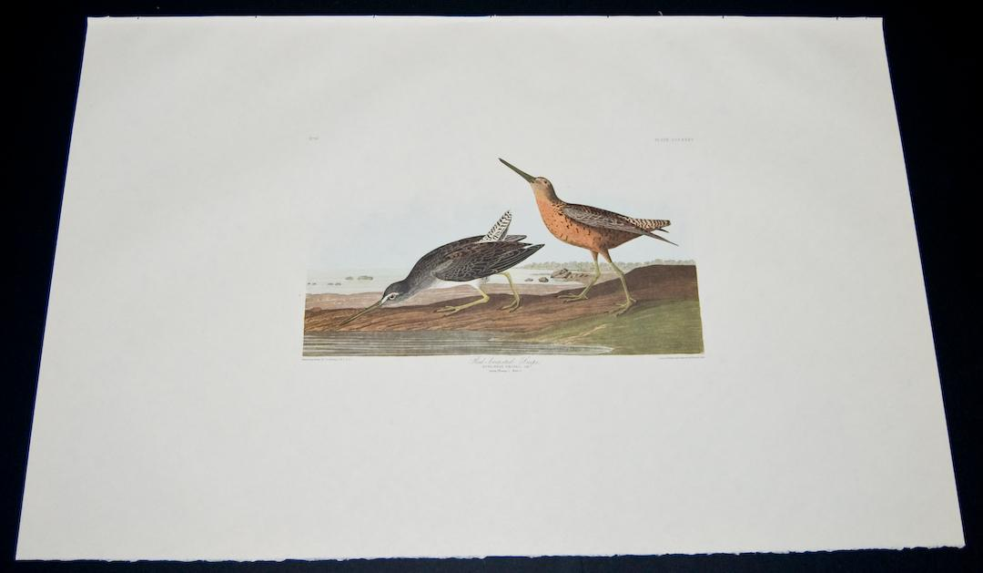 Red-breasted Snipe John James Audubon [Fine] (bi_22451616733) photo