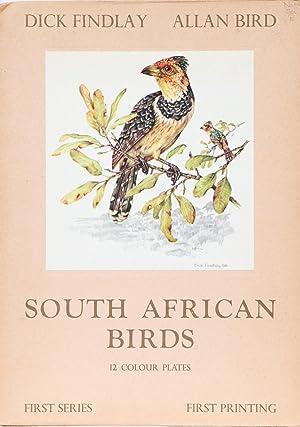 South African Birds: Findlay, D and Bird, A.