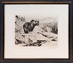 ORIGINAL ETCHING GRIZZLY BEAR