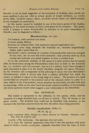 Report upon the Tunicata in the collection