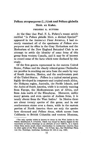 Pellaea atropurpurea (L.) Link and Pellaea glabella: Butters, Frederic K.