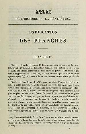 Physiologie de l'espà ce, histoire de la: Grimaud de Caux,
