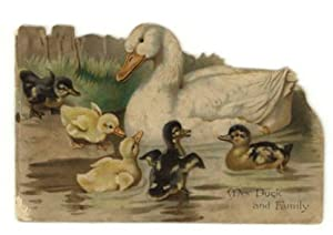 Mrs. Duck and Family.: Bingham, Clifton and others.