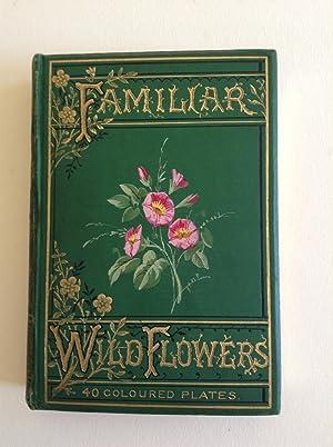 Familiar Wild Flowers: Hulme F. Edward
