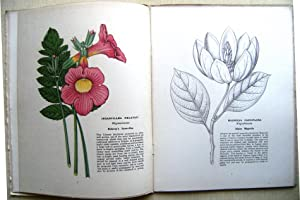 Hardy and Half-Hardy Plants - a monthly magazine. Volume 1 only (of 2)
