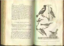 American Ornithology or, The Natural History of the Birds of the United States.: Wilson, Alexander.