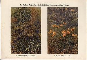Pflanzenschutz,Verordnung + Ergänzung, für Sachsen 1927: Ministerium des Inneren