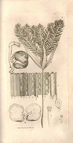 An Introduction to Physiological and Systematical Botany.: SMITH, JAMES EDWARD
