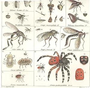 Illustratio iconographica insectorum quae in musaeis parisinis observavit et in lucem edidit Joh. ...