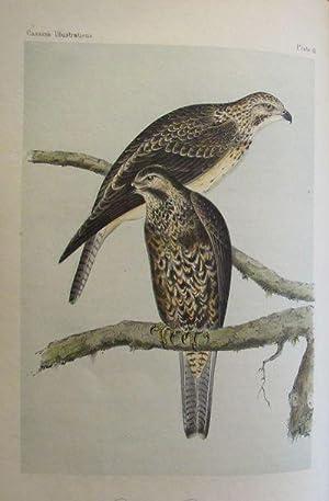 Illustrations of the Birds of California, Texas, Oregon, British and Russian America. Fascicule 9 ...