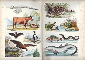 The Instructive Picture Book, or Progressive Lessons from the Natural History of Animals and Plants...
