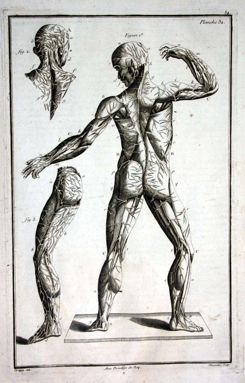 anatomie anatomy - ZVAB