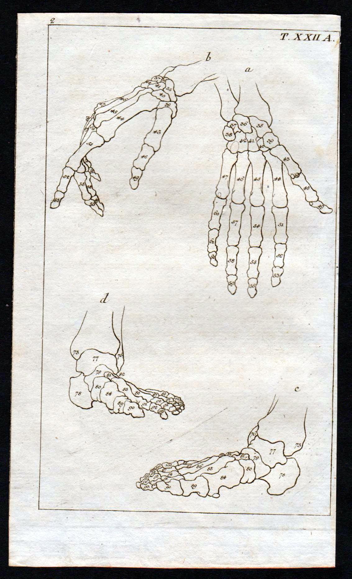 der fuss anatomie - ZVAB