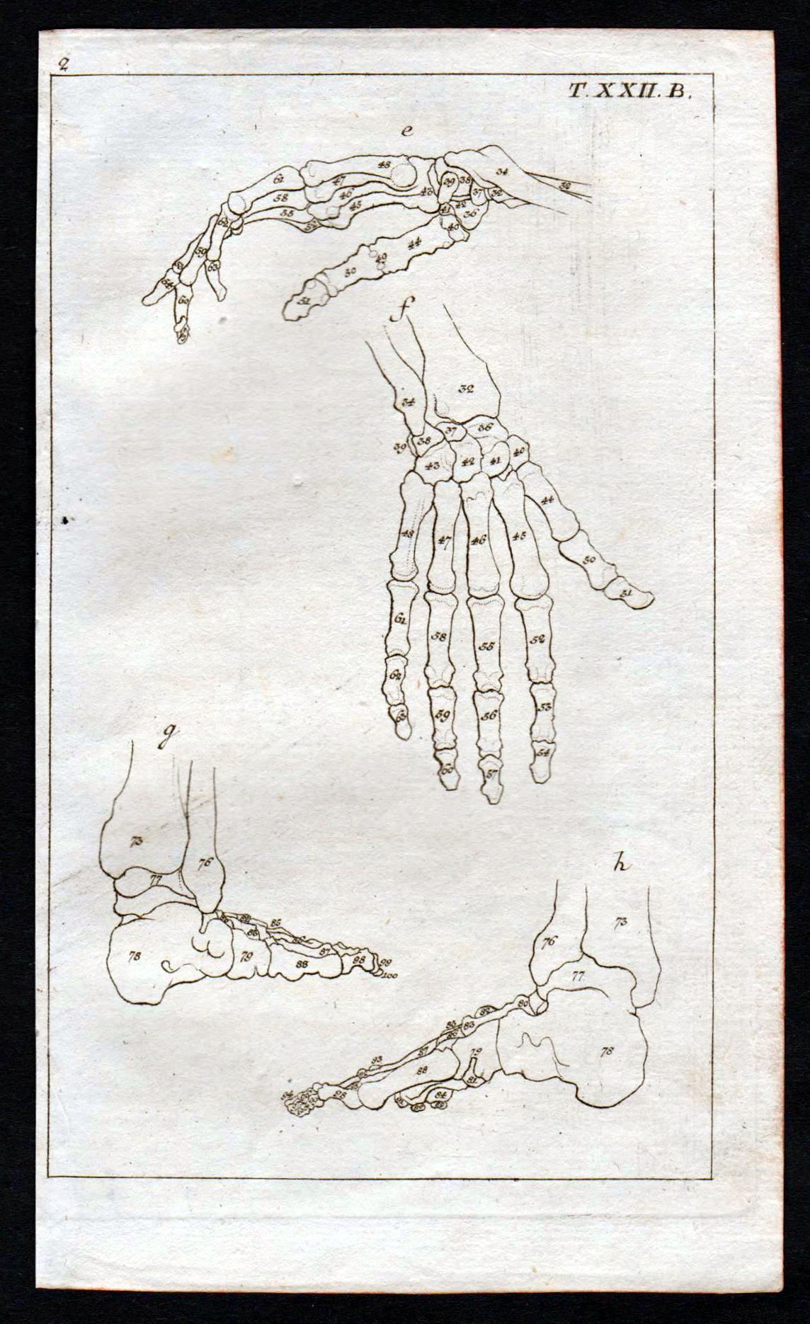 Niedlich Detaillierte Anatomie Des Fußes Galerie - Menschliche ...