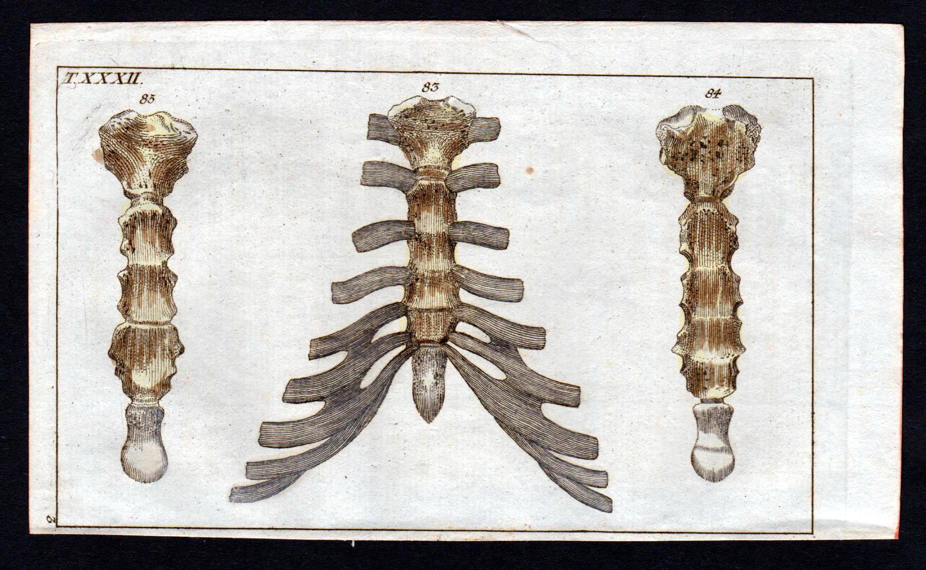Ziemlich Bild Des Brustbeins Zeitgenössisch - Menschliche Anatomie ...