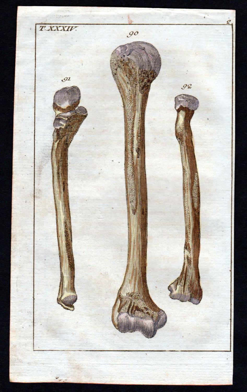 anatomie medizin - ZVAB