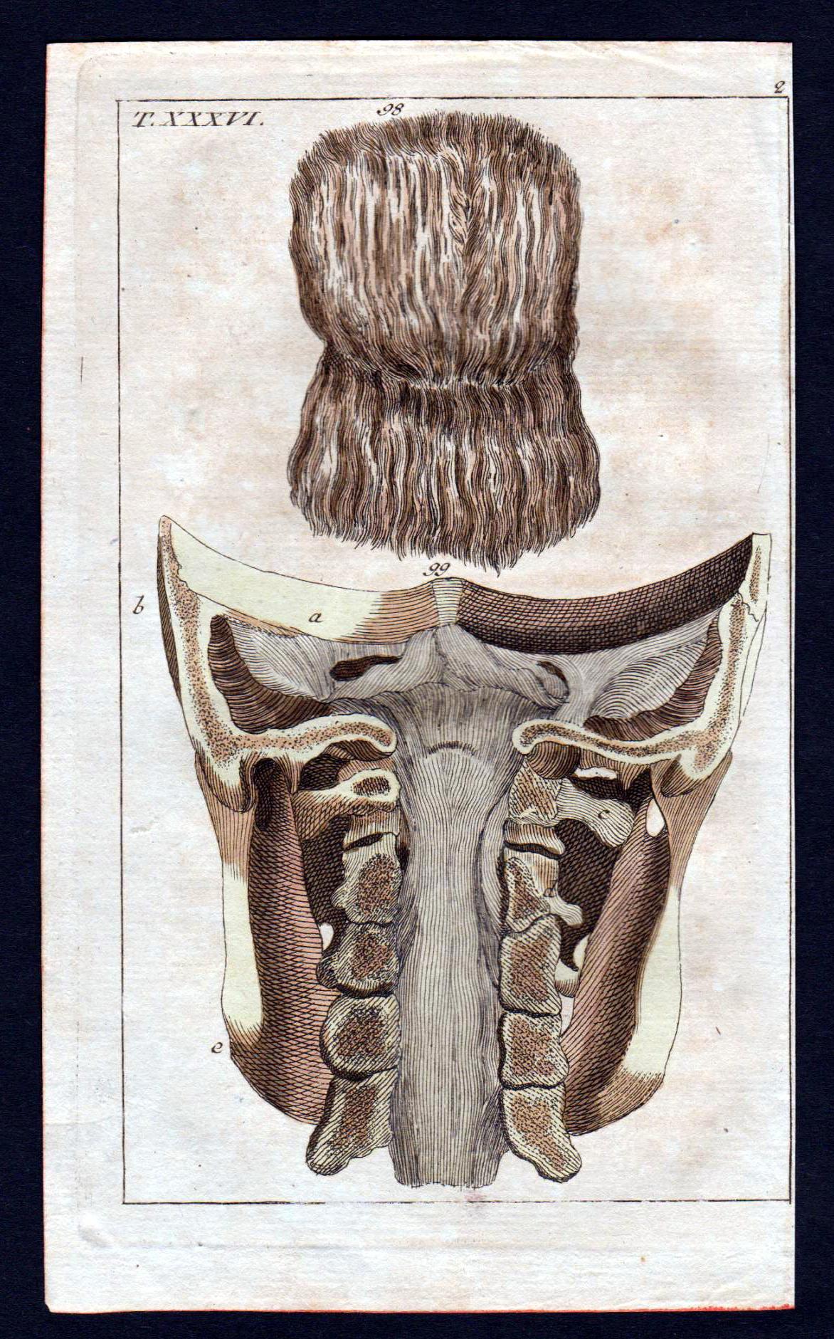 cervical vertebra Halswirbel Anatomie anatomy Medizin medicine ...