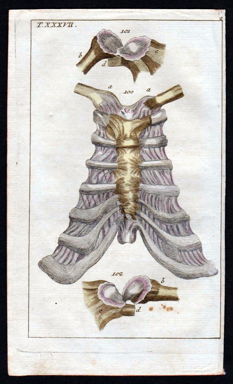 brustbein sternum anatomie - ZVAB