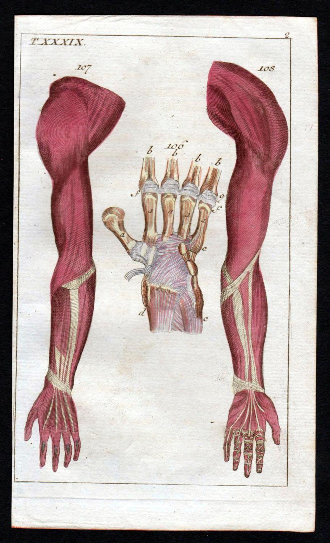 Handwurzel carpus arm hand Anatomie anatomy Medizin medicine ...