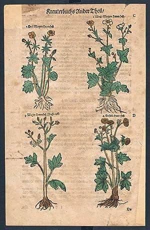 Ranunculaceae herbal Lonicer Kreuterbuch original woodcut sheet