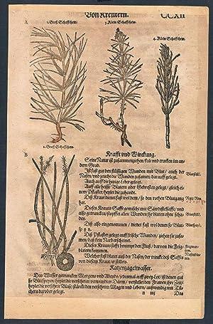 Equisetum Nymphaea herbal Lonicer Kreuterbuch orig woodcut
