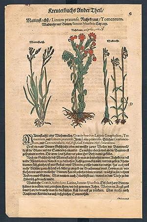 Linum pratense cudweeds herbal Lonicer Kreuterbuch orig