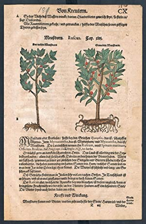 Ruscus Aloe herbal Lonicer Kreuterbuch original woodcut