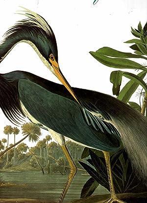 Audubon's Birds of America : The Audubon: Audubon, John James