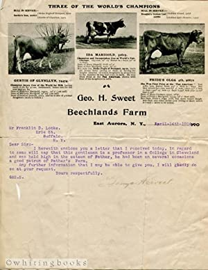 1904 Letter on Geo H Sweet Beechlands Farm Letterhead, Aurora, New York, Featuring Champion Jerse...