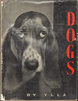 DOGS: Ylla