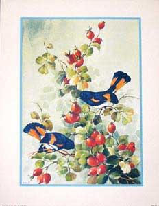 Bird and Blossom by Sibal. (532-B - 533-B).