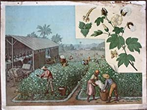 Baumwolle [19th Century View of Blacks picking and cleaning cotton].: Goering-Schmidt.