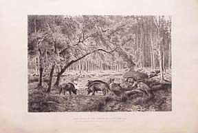 Wild Boars in the Forest of Fontainbleau.: Moran, Peter.