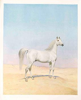 An Arabian Stallion.: Bird, Harrrington (1846-1936)