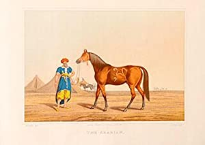The Arabian [Horse]. First edition.: Alken, Henry (1785-1851)