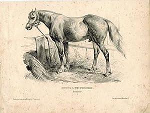 Chevel du Perche. Normande I.: Adam, Victor (1801-1866)