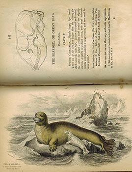 The Naturalist's Library. Vol. XXV. Mammalia.Amphibious Carnivora.: Jardine, William Sir