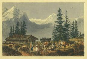 Mountain scene with cows.: Anonymous.