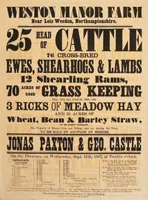 25 Head of Cattle, Ewes, Shearhogs &: Paxton, Jonas and