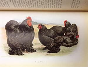 I. C. S. Refrence Library Standard Bred Poultry Vol. 1: International Correspondence Schools